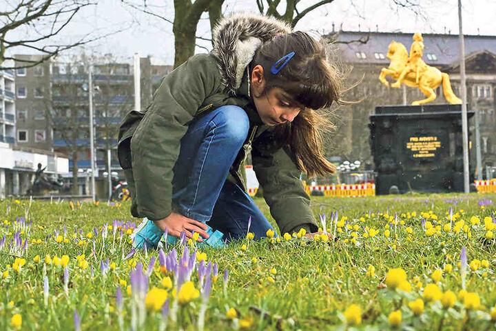 Astra (7) bestaunt die ersten Frühblüher am Goldenen Reiter.
