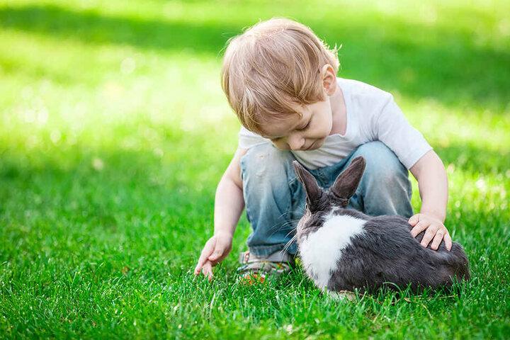 Kinder lieben Kaninchen. Aber die Tiere sollten keinesfalls als Geschenk, etwa zu Ostern, dienen.