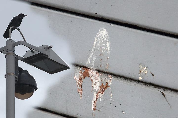 Eine Krähe auf einem Lichtmasten. Darunter stehende Sitzbänke oder Autos sehen entsprechend aus.