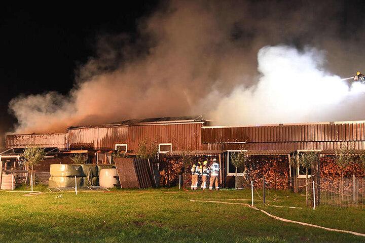 Die gesamte Halle der Tischlerei in Westenholz stand in Flammen.