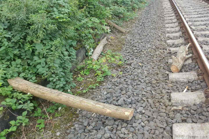 Die Barrikade aus Baumstämmen war circa 60 Zentimeter hoch.