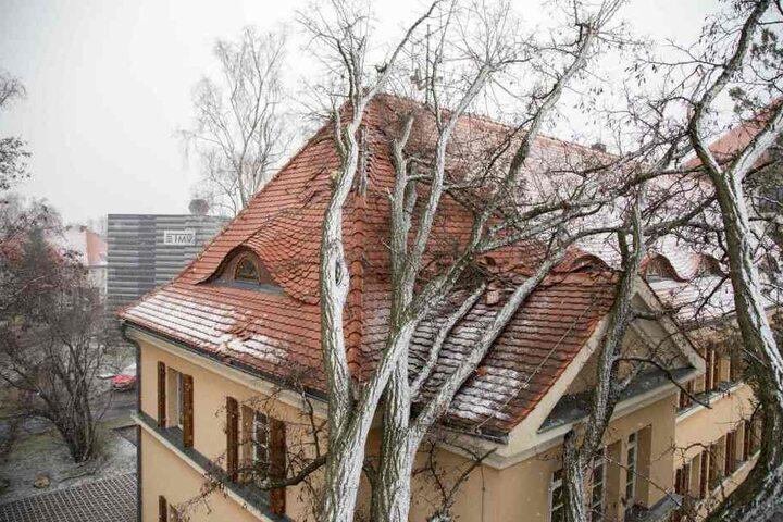 Ein Baum fiel in Freiberg auf ein Gebäude der Bergakademie.