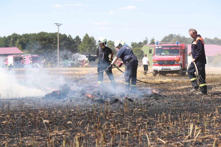 Feuerwehrleute beackern ein Feld in Langenhennersdorf. Knapp drei Hektar Getreide standen hier am Dienstagnachmittag in Flammen.