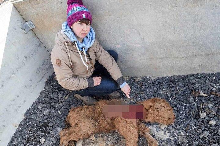 Sindy Franke (28) wartet auf einen weiteren Gutachter, der klären soll, ob ein Wolf oder ein Hund ihr Kalb gerissen hat.