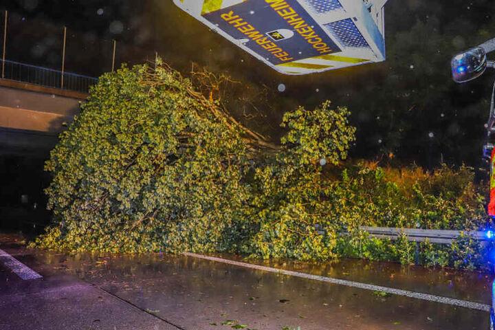 Der Baum stürzte auf die Fahrbahn.