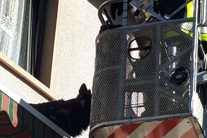 Der Feuerwehrkamerad lockte den Hund mit seinem Frikadellenbrötchen an.