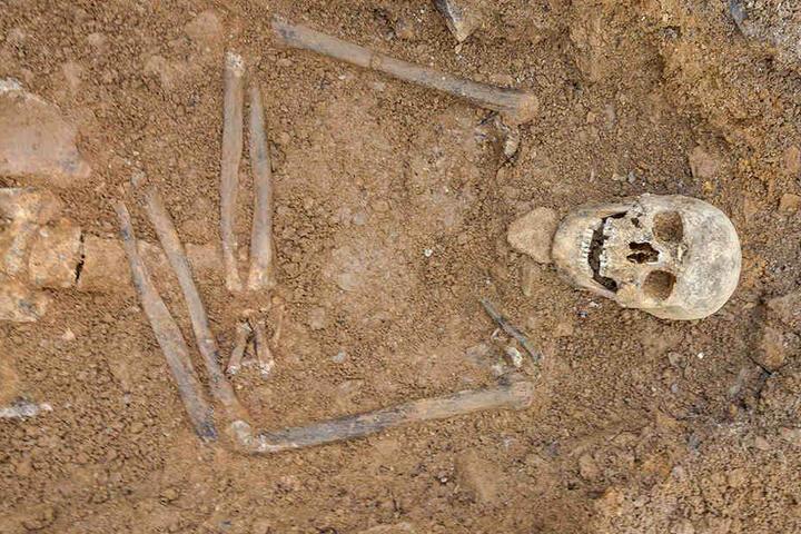 Außerordentlich gut in Schuss: Die Skelette haben gute Gebisse, auch ihre  Knochen zeigen keine größeren Auffälligkeiten.