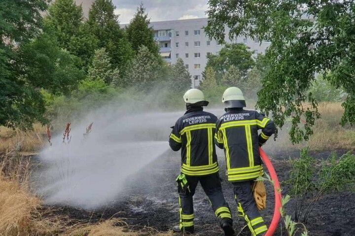 In Grüne stand eine Grünfläche in der Nähe des Kulkwitzer Sees in Flammen.