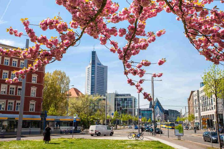 So schön wird es bald wieder in Leipzig blühen, dann soll die Stadt natürlich sauber sein.