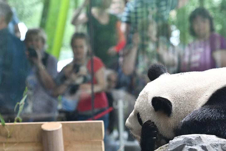 Die Besucher klopfen und schlagen gegen die Scheiben, dabei wollen die Tiere doch nur ihre Ruhe haben.