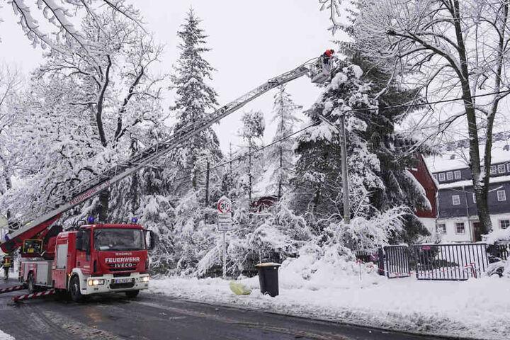 Auf dem Gelände der Evangelisch- Lutherischen Johanneskirchgemeinde Chemnitz-Reichenbrand kam die Feuerwehr zum Einsatz, um mehrere Bäume zu entfernen.