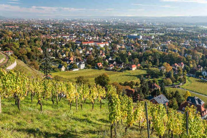 Nicht nur Radebeuls Weinberge ziehen viele Touristen an, auch Altkötzschenbroda ist sehr beliebt.