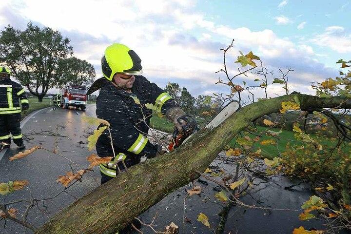 Entwurzelte Bäume, abgeknickte Äste: Die Feuerwehren waren bei den letzten  heftigen Stürmen im Dauereinsatz.