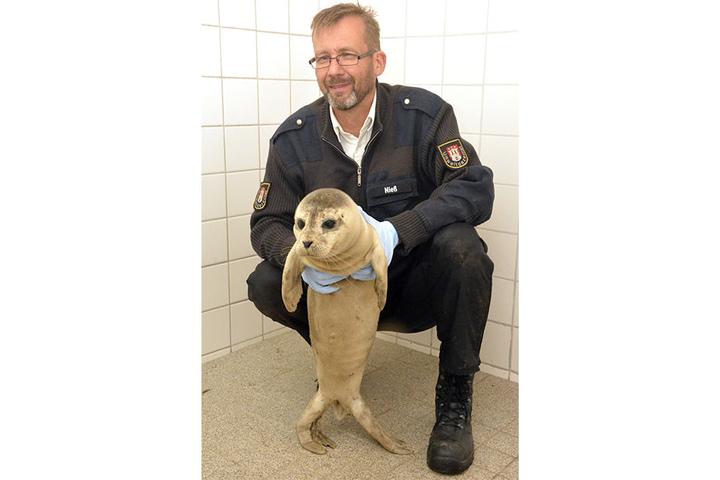 """Schwanenvater Olaf Nieß hält """"Stormy"""" im Schwanen-Winterquartier am Eppendorfer Mühlenteich."""