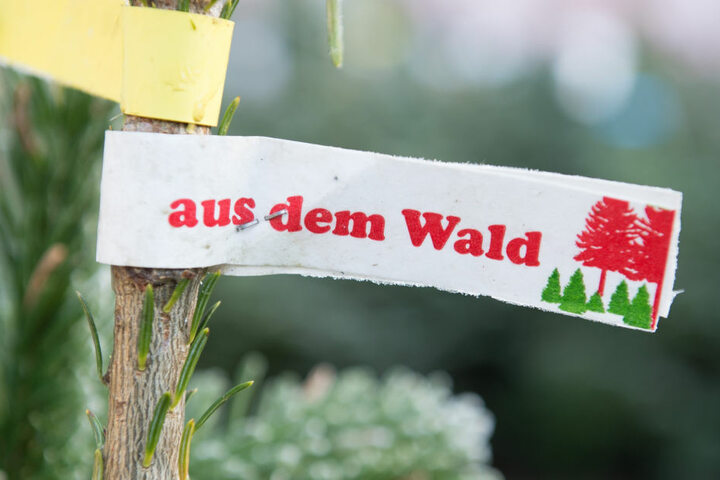 Winterliche Familienausflüge in den Wald zum Weihnachtsbäume selbst fällen liegen voll im Trend.