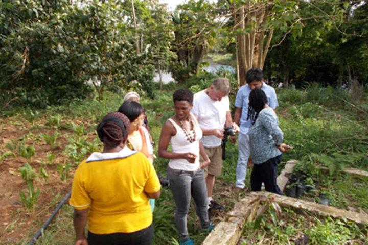 Kenia gehört zu den größten Macadamia-Produzenten in Afrika.