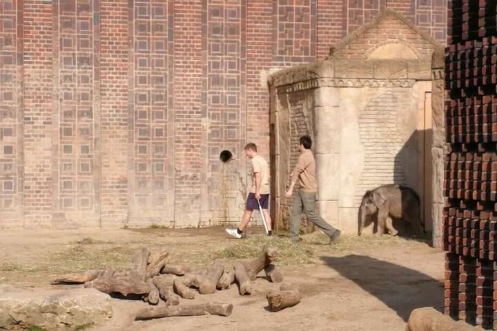 Und da ist der neue Star im Zoo Leipzig: Am Freitag trat er vor Hunderten Besuchern und der Presse aus dem Elefantentempel nach draußen.