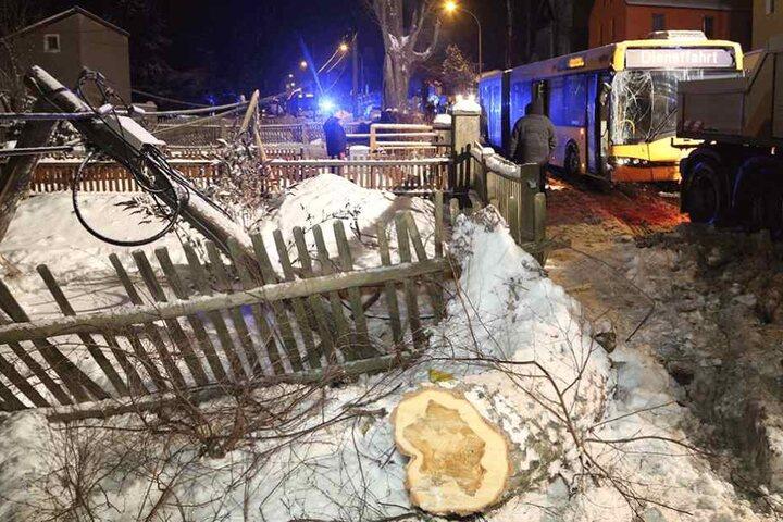 Zaun, Telefonmast und ein Baum wurden von dem außer Kontrolle geratenen Bus demoliert.