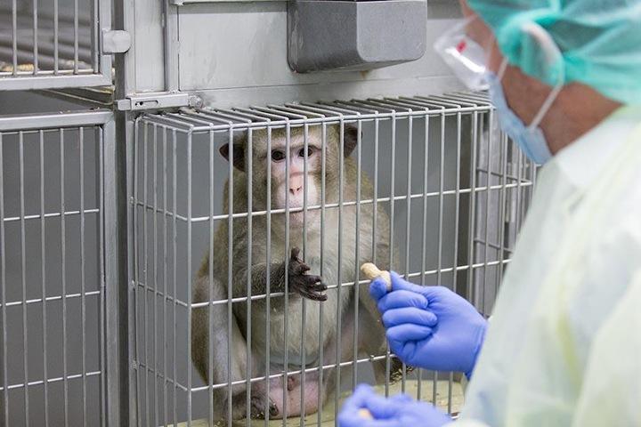 Prof. Dr. Stefan Schlatt, Medizinische Fakultät, füttert eine Makake in einem Gehege am 24.11.2017 in einem Labor der Zentralen Tierexperimentellen Einrichtung (ZTE) der Medizinischen Fakultät der Uni Münster.