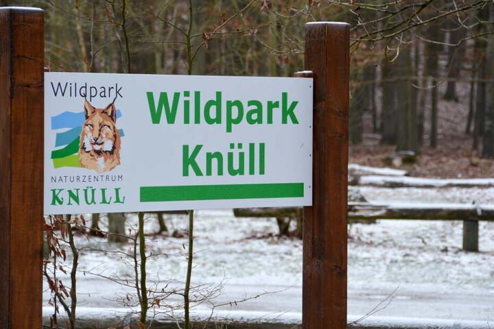 Am 18. Januar waren zwei Wölfe aus dem Wildpark Knüll ausgebüxt.