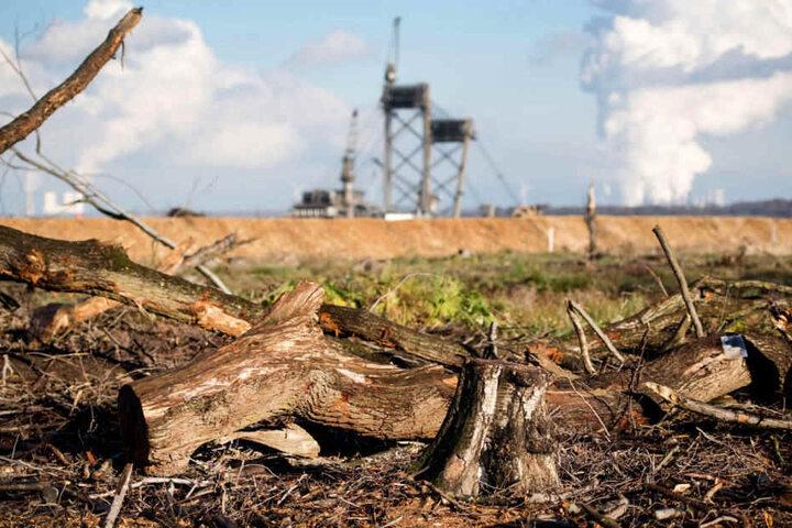 Sollte die Klage scheitern, darf RWE dennoch mindestens fünf Monate lang die richterliche Entscheidung nicht vollziehen.
