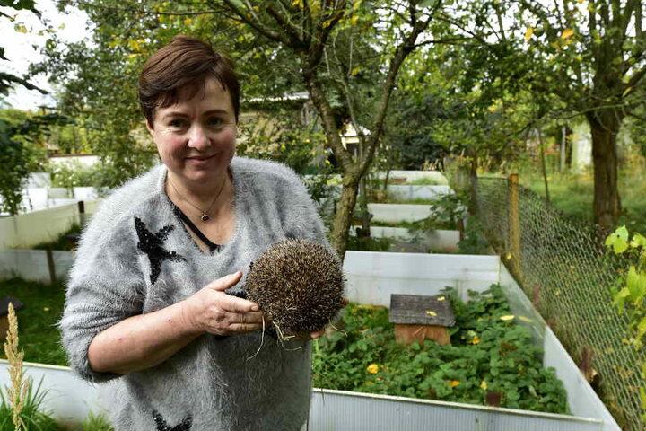 Kathrin Effenberger hat ein Herz für Igel, die sie im Garten durchfüttert und aufpäppelt.