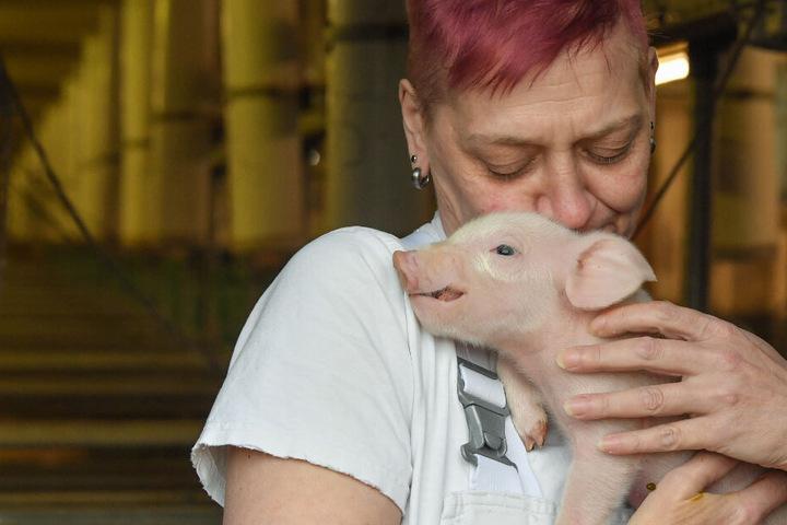 Das Risiko eines mit der Afrikanischen Schweinepest (ASP) infizierten Wildschweins in Deutschland und in Brandenburg ist hoch, sind sich die Fachleute einig.