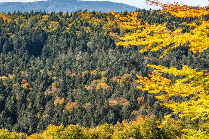 Der Zustand der Wälder in Bayern hat sich zuletzt noch einmal drastisch verschlechtert.