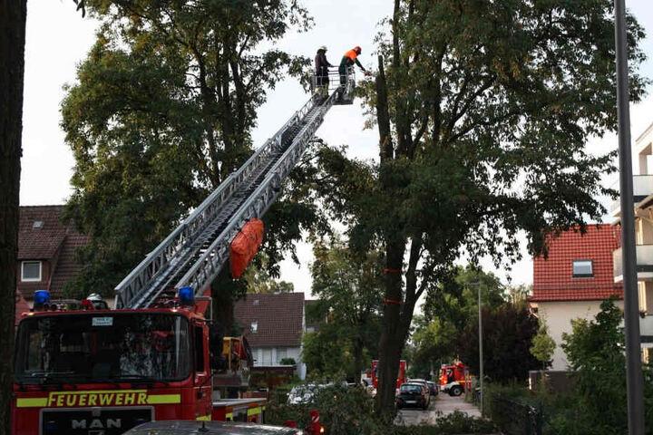 Ein 15 Meter hoher Baum in der Wildbrandstraße in Bielefeld drohte auseinanderzubrechen. Daher musste die Feuerwehr ihn fällen.