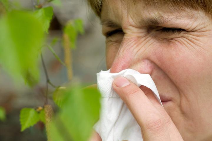 Derzeit stehen die Pollen in voller Blüte, durch das Wetter ist die Belastung für Allergiker aber nicht so hoch.