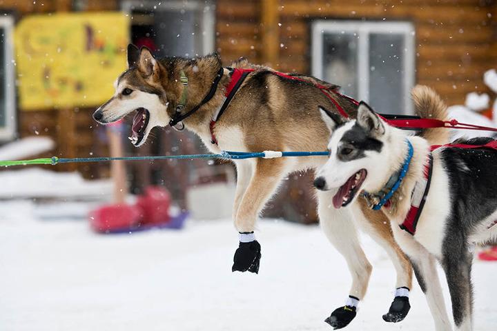 Normalerweise ist Alaska für seine Kälte und Hundeschlittenrennen im Winter bekannt. Diesen Sommer macht jedoch die Hitze Schlagzeilen.