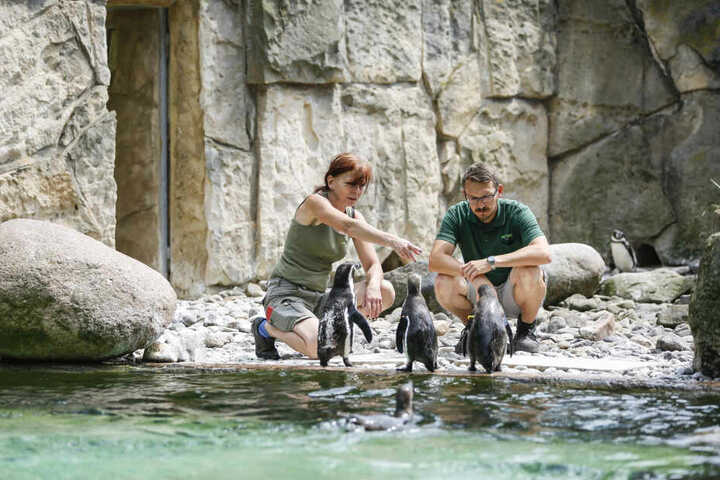 Kurator Matthias Hendel (37) und Tierpflegerin Kerstin Kunadt (54) im Gehege.