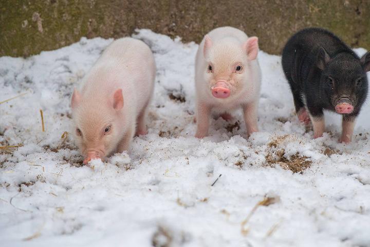 Lange können die drei Minis nicht im Schnee spielen, dann wird es zu kalt.