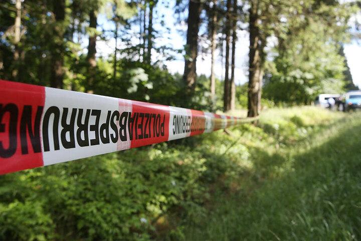 In einem Waldstück wie diesem fand am Tag der Deutschen Einheit ein Pilzsammler ein rätselhaftes Skelett.