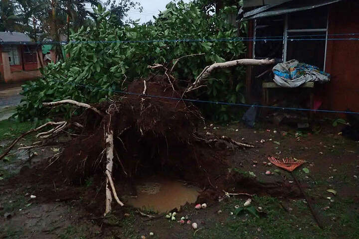 In Panama wurde ein Kind auf dem Schulweg von einem umstürzenden Baum getötet.