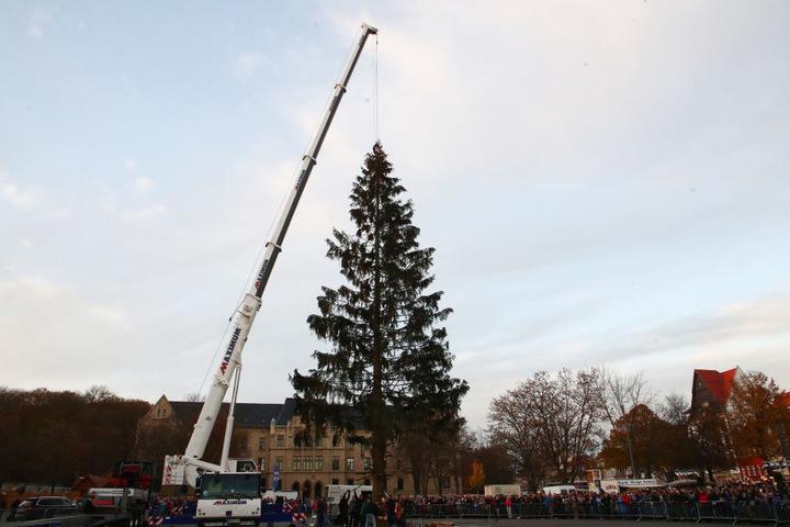 Auch der große Weihnachtsbaum steht schon seit letzter Woche auf dem Domplatz.