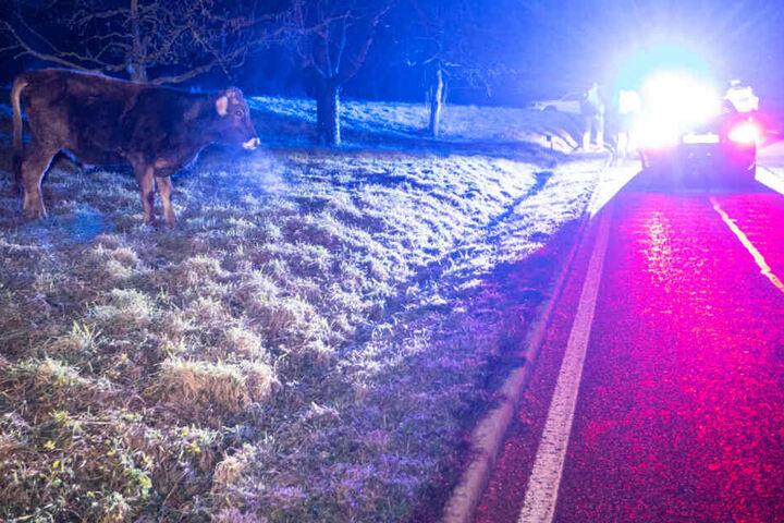 Die Fahrerin konnte nicht mehr allen Tieren der Kuhherde ausweichen.