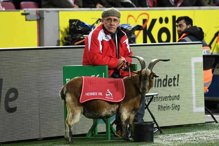"""Der Kölner Geißbock """"Hennes"""", der bei jedem Heimspiel im Stadion ist, dient den Leipzigern als Vorbild."""