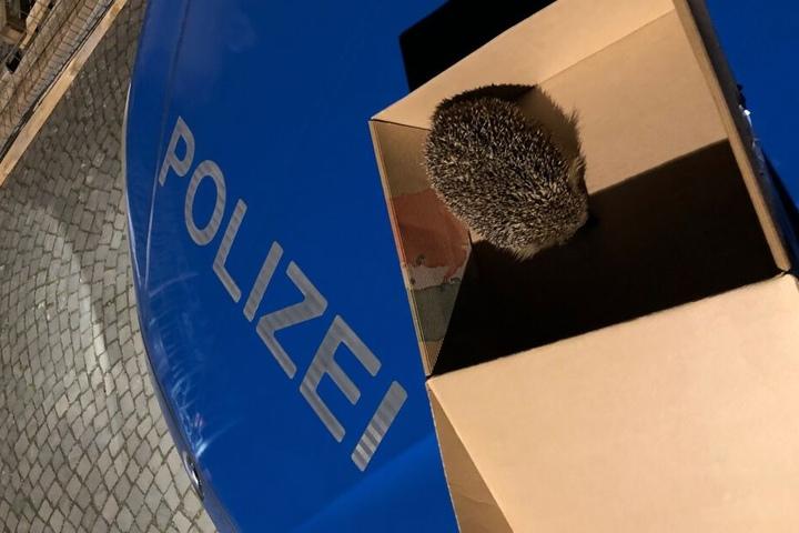 Polizeibeamte haben den Igel vor der Straßenbahn gerettet.