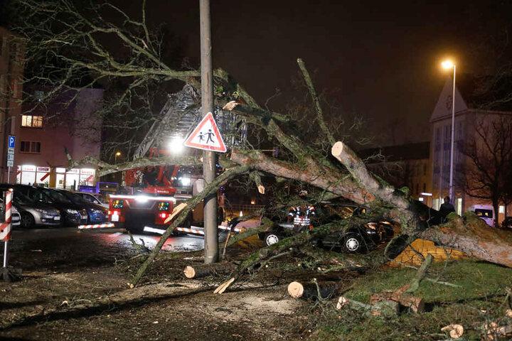 Die Feuerwehr musste den Baum für den Abtransport in Stücke schneiden.