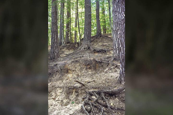 Manche Wege sind nicht mehr als solche erkennbar: Der Waldboden erodiert.