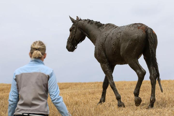Das Pferd konnte auf die Koppel zurück.