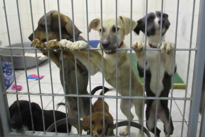 Die Tiere wurden dem Tierschutzverein Marienberg übergeben.