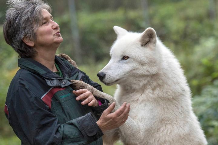 Die wildbiologische Leiterin des Parks in Hanau, Marion Ebel, pflegte eine ganz besonders enge Bindung zu den Polarwölfen.