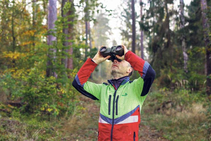 """Mit dem Fernglas sucht Heiko Schwarz (51) nach Zapfen. """"Der Zapfenbehang ist grenzwertig"""", sagt er. Doch die Nachfrage ist groß."""
