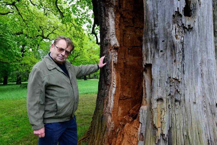 Zeitzeuge Günter Baumgart (82) kann sich an einen verwüsteten Großen Garten  erinnern.