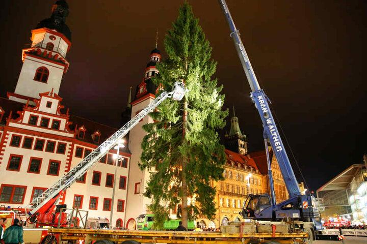 Der Baum kommt gegen 17 Uhr per Tieflader in Chemnitz an.