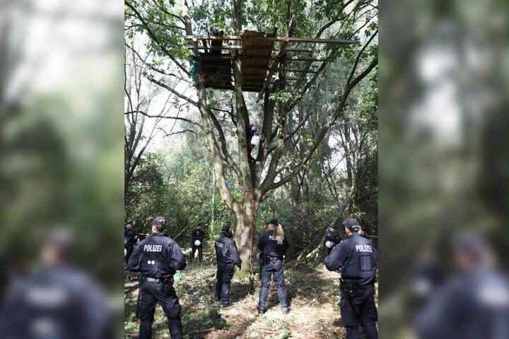 Polizisten haben das Baumhaus umstellt, von dem gerade ein Besetzer runterklettert.