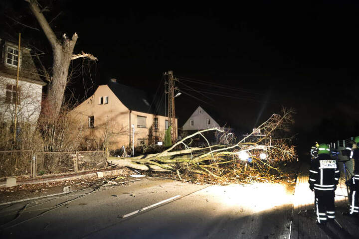 In Mittelbach beschädigte ein Baum mehrere Stromleitungen.
