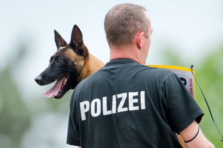 Auch mit Spürhunden suchte die Polizei nach dem Jungen. (Symbolbild)